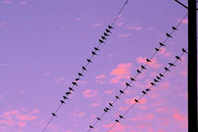 Birds On A Wire Photograph - Watching The Sunset  by Kimberly Reeves