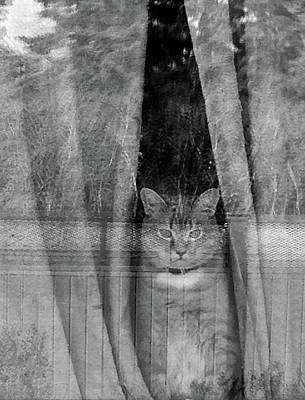 Photograph - Watching The World Go By by David Pantuso