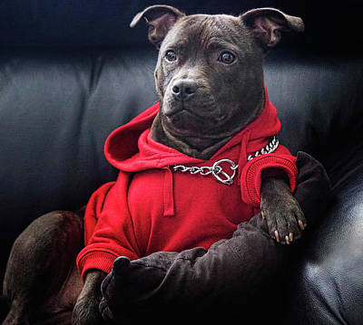 Funny Dog Digital Art - Cute Dog Watching Tv by Shaun Poole