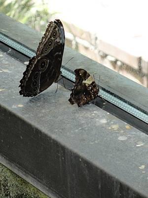 Photograph - Brown Black Butterflies Watching Wondering by Mozelle Beigel Martin