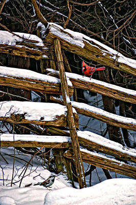 Cedar Fence Photograph - Watching You by Steve Harrington