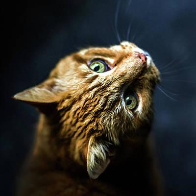 Pastel - Watching You Watching Me Cat Art Print by Georgiana Romanovna