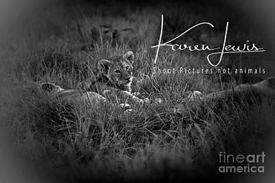 Photograph - Watching You Watching Me by Karen Lewis