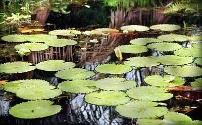 Photograph - Water Lily Ondo by Muyiwa OSIFUYE