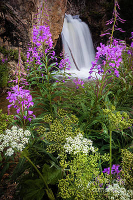 Photograph - Water And Flowers by Steven Reed