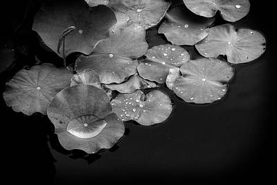 Photograph - Water And Lilies by Alan Raasch