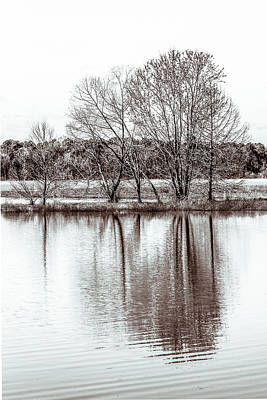 Photograph - Water And Trees by Wade Brooks
