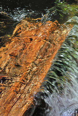 Photograph - Water And Wood by Ron Cline