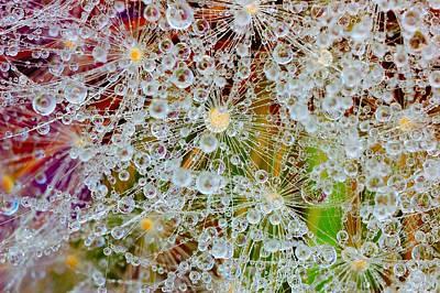 Water Beads Original by Yuri Hope