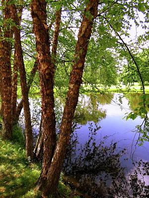 Photograph - Water Birch by Mike Flake