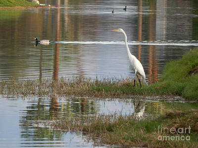 Photograph - Water Birds by Chris Tarpening