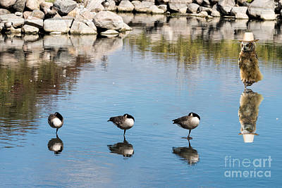 Photograph - Water Birds In One-leg Power Nap by Les Palenik