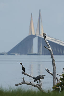 Water Birds On Tampa Bay Art Print by Carl Purcell