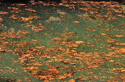Photograph - Water Blend Of Dry Leafs  by Puzzles Shum
