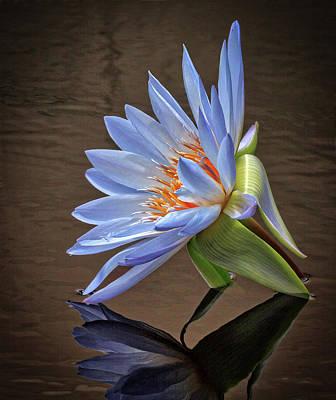 Photograph - Water Bloom by Robert Pilkington