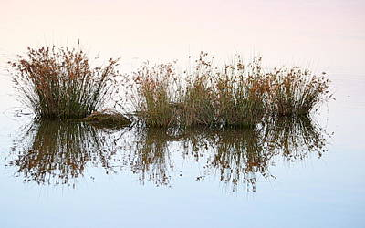 Photograph - Water Borne by AJ Schibig