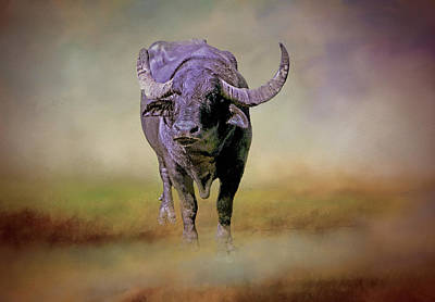 Photograph - Water Buffalo by Phyllis Taylor