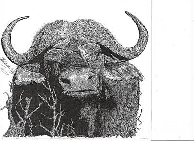 Drawing - Water Buffalo by Bill Hubbard