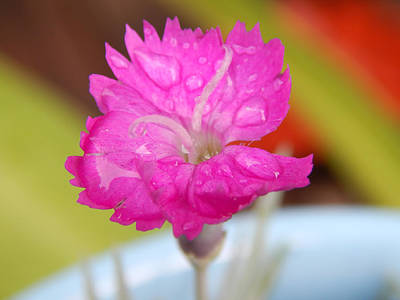 Water Bug Flower Art Print