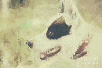 Photograph - Water Colour Art Of An Adorable Puppy Dog by Jorgo Photography - Wall Art Gallery