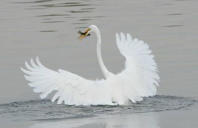 Photograph - Water Dance by Fraida Gutovich