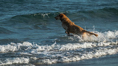 Photograph - Water Dog Delray Beach Florida by Lawrence S Richardson Jr