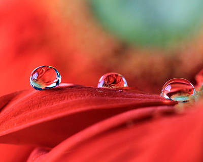 Photograph - Water Drop Reflections by Angela Murdock