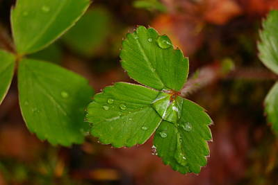 Forest Floor Photograph - Water Drop On A Green Plant by Jeff Swan