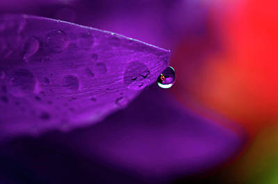 Water Drop Reflections With Purple II Art Print by Laura Mountainspring