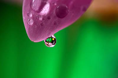 Water Drop Reflections With Purple Art Print