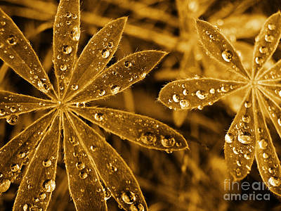 Photograph - Water Droplets In Sepia by Tara Turner