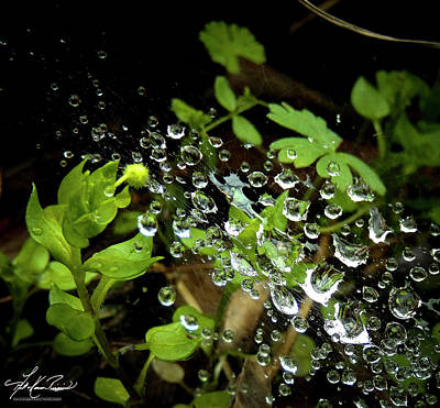 Photograph - Water Droplets On A Spider's Web by Karen Rispin