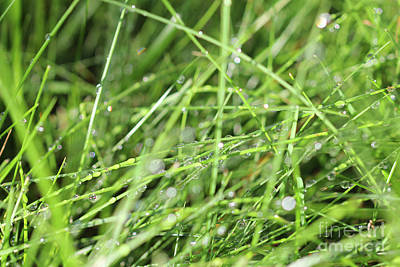 Photograph - Water Droplets On Grass by Donna L Munro