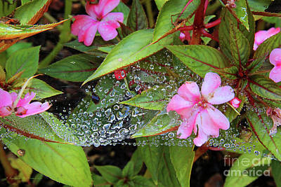 Photograph - Water Drops by Inspirational Photo Creations Audrey Taylor