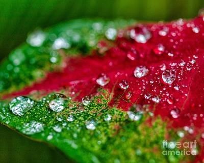 Photograph - Water Drops Eight by Ken Frischkorn