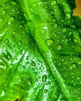 Photograph - Water Drops Five by Ken Frischkorn