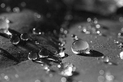 Photograph - Water Drops In Black And White by Scott Holmes