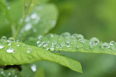 Photograph - Water Drops by Keith Boone