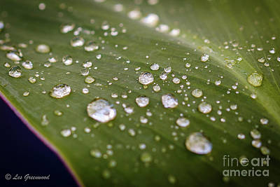 Photograph - Water Drops by Les Greenwood