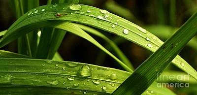 Photograph - Water Drops by Mario Brenes Simon