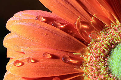 Water Drops On Colorful Flower Petals Art Print