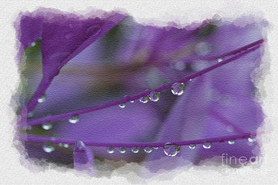 Photograph - Water Drops On Flower by Dan Friend
