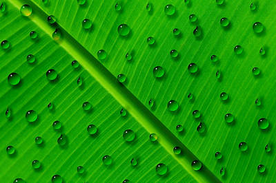 Water Drops On Palm Leaf Art Print by Georgeta Blanaru