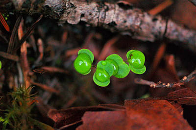 Sean - Water drops on tiny plants by Jeff Swan