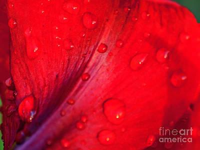 Photograph - Water Drops One by Ken Frischkorn