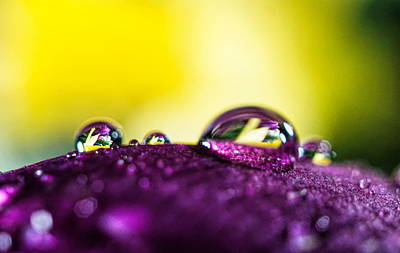 Photograph - Water Drops Reflections by Lilia D