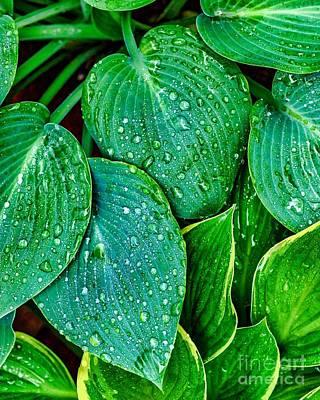 Photograph - Water Drops Seven by Ken Frischkorn