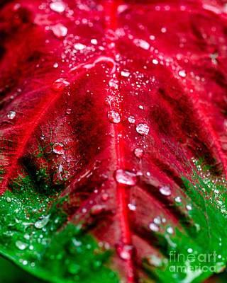 Photograph - Water Drops Six by Ken Frischkorn