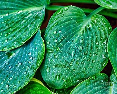 Photograph - Water Drops Three by Ken Frischkorn