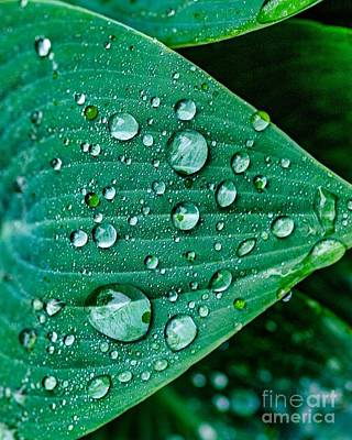 Photograph - Water Drops Two by Ken Frischkorn